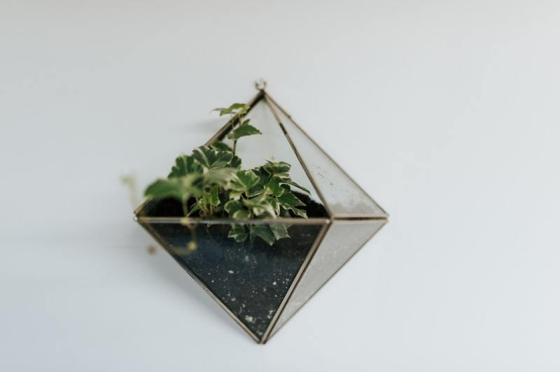 Why You Should Participate In A Terrarium Workshop